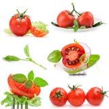 Collezioni di pomodori Fotografia Stock