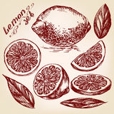 Collezioni di schizzo disegnato a mano di vettore dei limoni illustrazione vettoriale