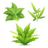Collezioni tropicali delle foglie verdi dell'albero isolate illustrazione vettoriale