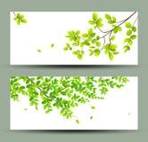 Collezioni tropicali delle insegne delle foglie verdi royalty illustrazione gratis