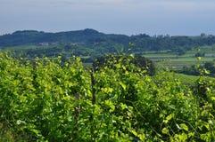 Colli Orientali del弗留利酒区域,日落 库存图片
