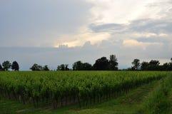 Colli Orientali del Friuli wine region, sunset. Royalty Free Stock Photo