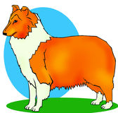 Collie. Scottish shepherd computer generated illustration royalty free illustration