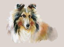Collie Animal-de illustratievector van de hondwaterverf stock illustratie