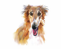 Collie Animal dog watercolor illustration vector.  Royalty Free Stock Photo
