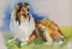 Collie Animal dog watercolor illustration vector.  Stock Photos