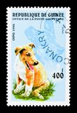 Collie (Canis lupus familiaris), Dogs serie, circa 1996. MOSCOW, RUSSIA - NOVEMBER 25, 2017: A stamp printed in Guinea shows Collie (Canis lupus stock images