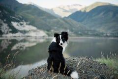 Collie de Bborder que se sienta en un parque nacional de desatención del distrito del lago del peñasco fotos de archivo libres de regalías