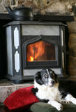 Collie de beira por Woodstove Imagem de Stock Royalty Free