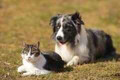 Collie de frontera detrás de un gato Imagenes de archivo