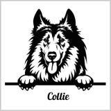 Collie - het Gluren Honden - het hoofd van het rassengezicht dat op wit wordt geïsoleerd vector illustratie