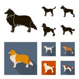 Collie, labrador, boxer, poodle. Dog breeds set collection icons in black, flat style vector symbol stock illustration.  Royalty Free Stock Images