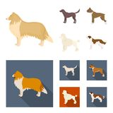 Collie, labrador, boxer, poodle. Dog breeds set collection icons in cartoon,flat style vector symbol stock illustration.  Stock Image