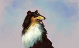 Collie portrait drawing. dog Stock Image