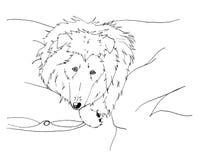 Collie ruvide sveglie che si trovano ad un letto Immagine Stock