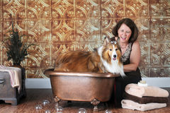 Collie Wash Stock Photo