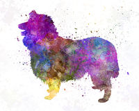 Collie in watercolor Stock Image