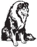 Collie zwart wit royalty-vrije illustratie