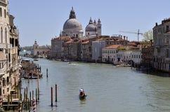 Colliecollie Venedig Italien Arkivbilder