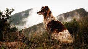 Colliehund i de dimmiga Drakensberg bergen Arkivfoto