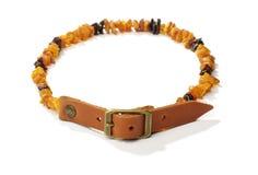Collier ambre de puce et de coutil pour des animaux familiers Photo stock