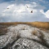 collieriy ξηρός παλαιός επάνω του &gam Στοκ εικόνες με δικαίωμα ελεύθερης χρήσης