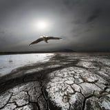 colliery lota rozsypisko nad seagull odpady Zdjęcia Royalty Free