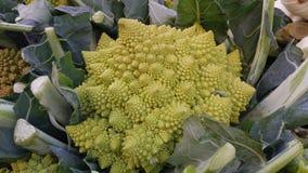 Colliflower Romanesko Green Unic vegetable look Stock Photos