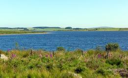 Colliford湖博德明康沃尔郡英国英国 免版税库存图片