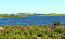 Colliford lake Bodmin Cornwall England UK. Colliford lake reservoir Bodmin Moor Cornwall England UK Royalty Free Stock Images