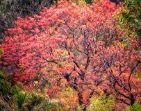 Collina Colourful Pakistan di Margalla dell'albero immagini stock