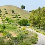 Collina con di olivo Immagini Stock