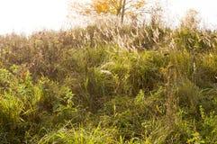 Collina con erba e l'albero vicino, natura fotografie stock libere da diritti