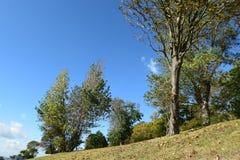 Collina con gli alberi Immagine Stock