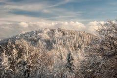 collina coperta dalla foresta congelata durante il giorno di inverno di congelamento di cielo blu e di nuvole fotografia stock