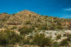 Collina del cactus Fotografia Stock
