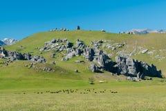 Collina del castello della Nuova Zelanda in parco nazionale alpino Fotografie Stock Libere da Diritti