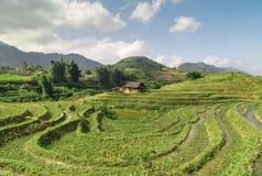 Collina del giacimento del riso di agricoltura del villaggio dell'Asia Immagini Stock Libere da Diritti
