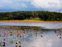 Collina del lago Fotografia Stock