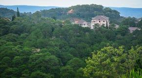 Collina del pino con le ville in Dalat, Vietnam Fotografie Stock Libere da Diritti