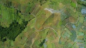 Collina del terreno coltivabile con il sistema a terrazze Immagini Stock Libere da Diritti