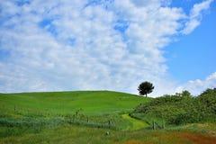 1 collina dell'albero Fotografie Stock Libere da Diritti