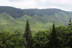 Collina della montagna Immagine Stock