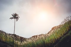 Collina della montagna con la palma, invasa con le piante della canna da zucchero Raggi di Sun che vengono attraverso le nuvole s Fotografia Stock Libera da Diritti