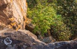 Collina della montagna dell'albero e della pietra o della roccia a Pha Hua Rue Cliff Phayao Attractions Thailand immagine stock libera da diritti