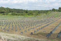 Collina della piantagione della scuola materna della palma da olio immagini stock