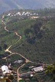 Collina della piantagione di tè Fotografie Stock
