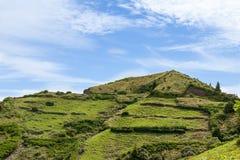 Collina della piramide con Ginger Lilys, sao Miguel, Azzorre, Portogallo Fotografia Stock Libera da Diritti