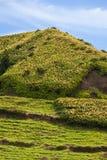 Collina della piramide con Ginger Lilys, sao Miguel, Azzorre, Portogallo Immagine Stock Libera da Diritti