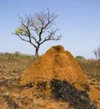 Collina della termite nella centrale di Madagacar Fotografia Stock